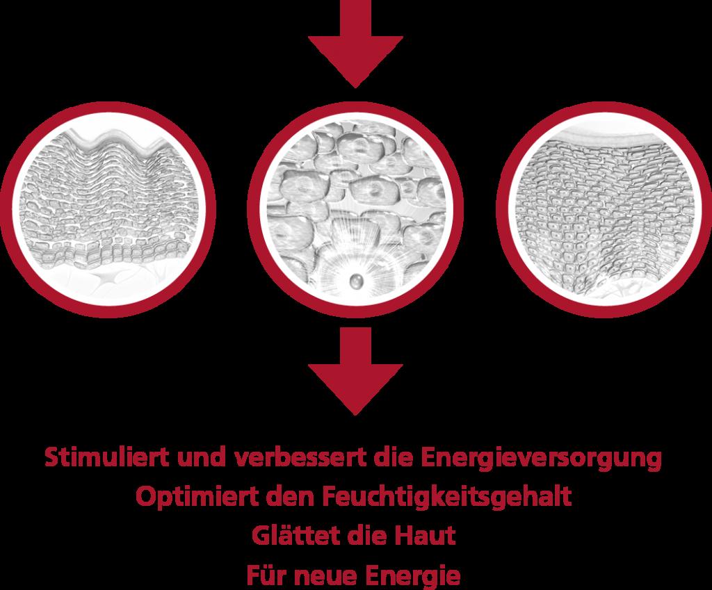 RejuvenMenComplex_Zeichnung